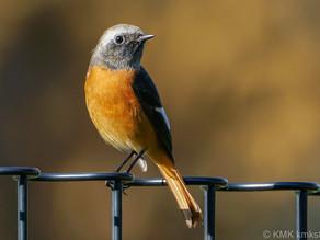 上鳥羽北公園の野鳥日記(2020年10月31日)