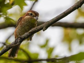 山田池公園の野鳥日記(2020年10月4日)