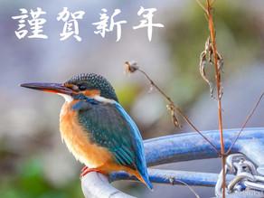 馬見丘陵公園の野鳥日記(2021年1月1日)