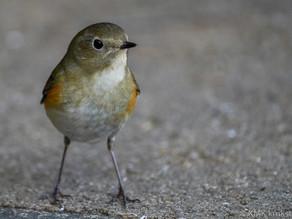 山田池公園の野鳥日記(2021年2月21日)