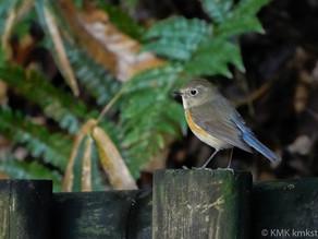 山田池公園の野鳥日記(2020年11月23日)
