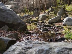 山田池公園の散策日記(2021年03月14日)