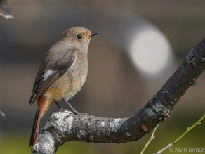 山田池公園の野鳥日記(2021年3月14日)