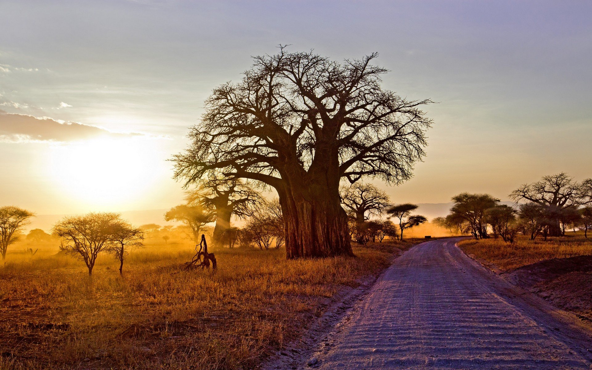 baobab_arbol_africa_naturaleza_1920x1200