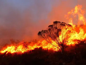 Los incendios de Córdoba: una catástrofe que hay que frenar
