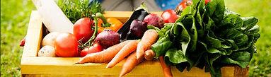 vegeatble-banner.jpg