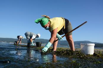 Mariscadoras faenando en la Ría de Pontevedra