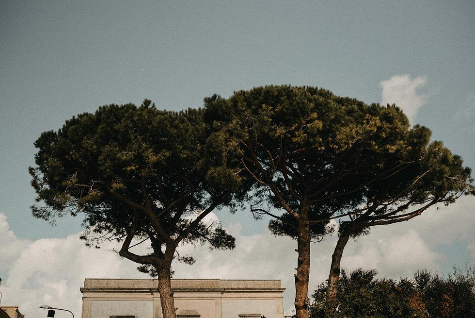 bomen fotografeert in Italië