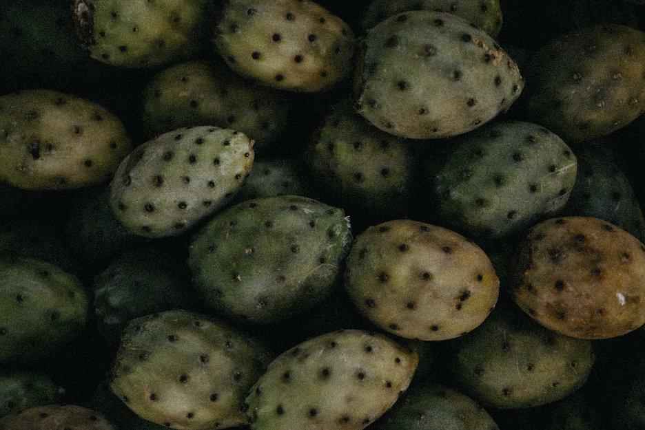cactus fruit uit marokko