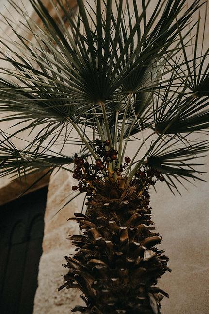 palmboom in italië