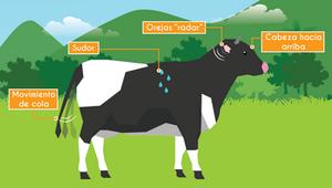 Infografía signos de estrés del ganado