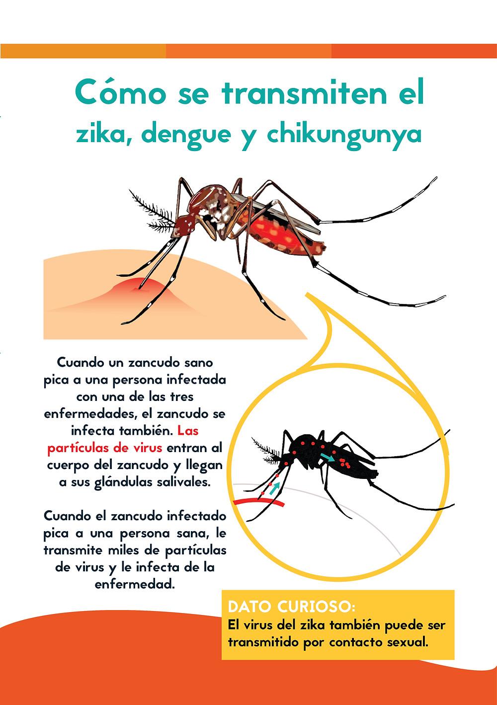 Cómo se transmite zika, dengue y chikungunya. Página de manual.