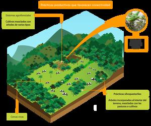 Infografía sobre prácticas productivas que favorecen la conectividad en el bosque nublado de Pichincha.