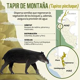 Tapir1.png