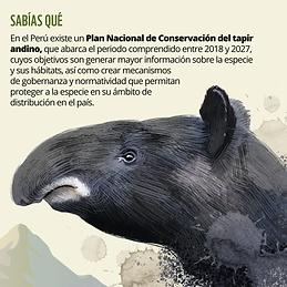 Tapir4.png