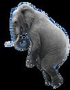 olifant%2520doorzichtig_edited_edited.pn