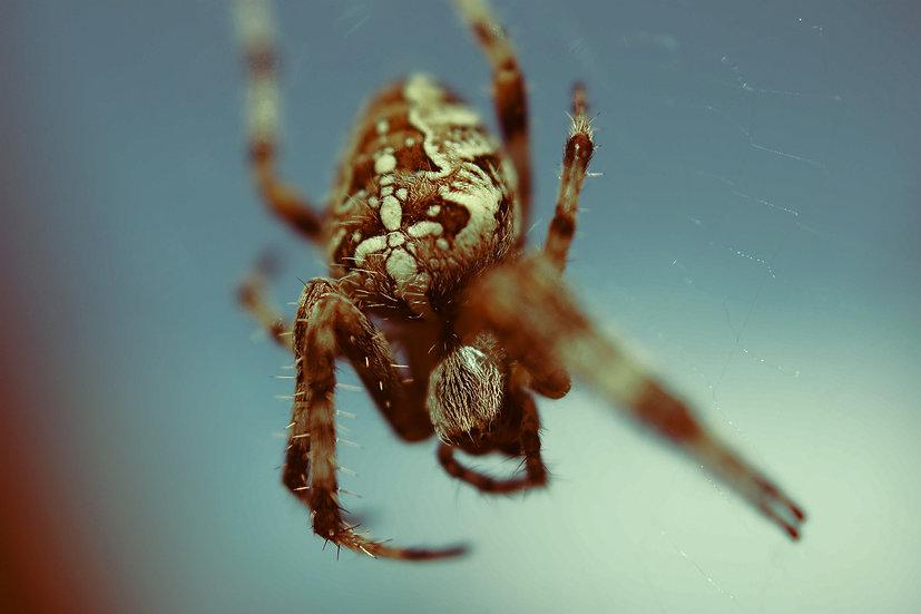 Premium Quality Art Print   Spider Print   Yorkshire Photo Restoration
