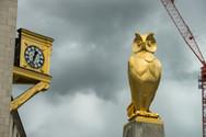leeds owl photo.jpg