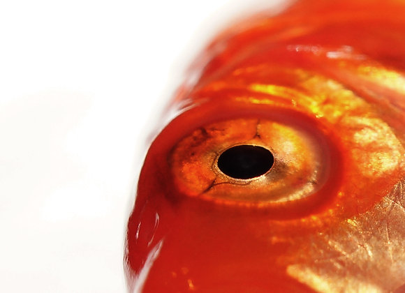 Fish Print, Wall art, Photo Print, Photo Art, Macro Photography