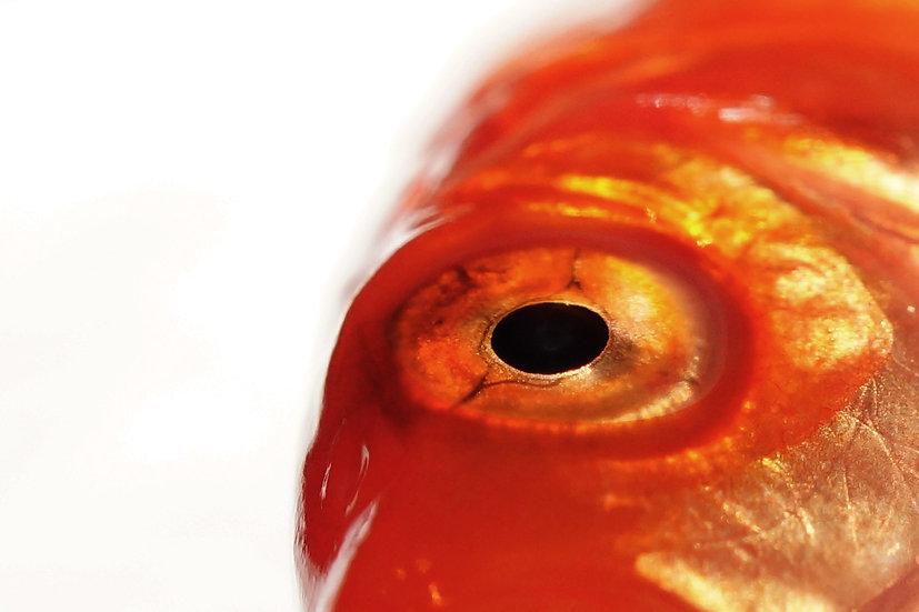 Premium Quality Art Print    Fish Print    Yorkshire Photo Restoration