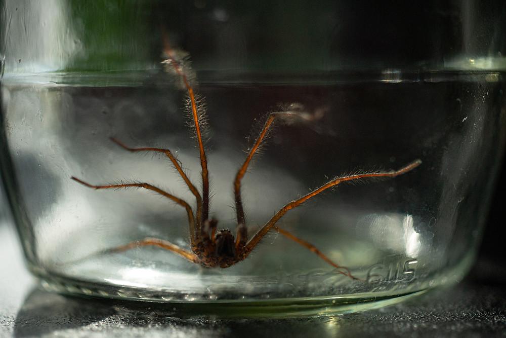 A spider in a jar