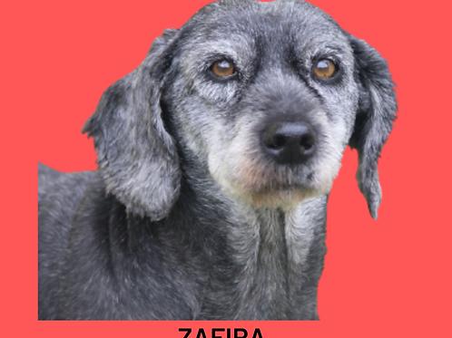 Zafira-300 Anjos