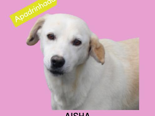 Aisha-Sr. Claudio