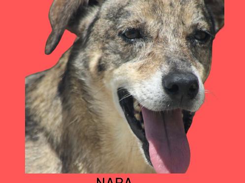 Nara-300 Anjos