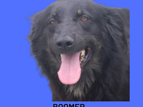 Boomer-mirella