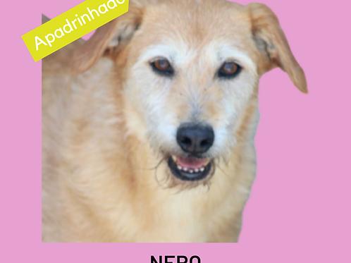 Nero-nenê-pedreira