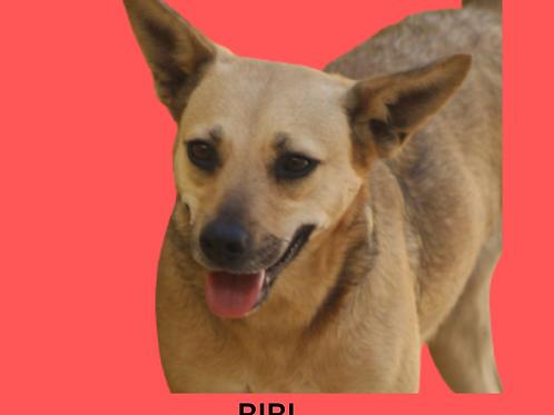 Bibi-embu