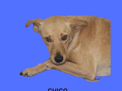 Chico-sandra