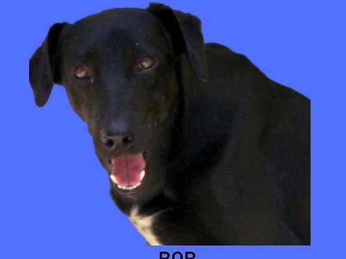 Bob-layla