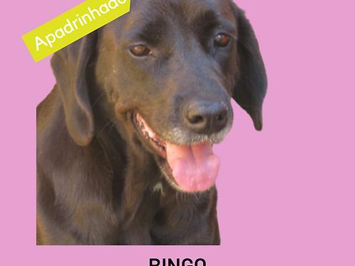 Bingo-300 Anjos