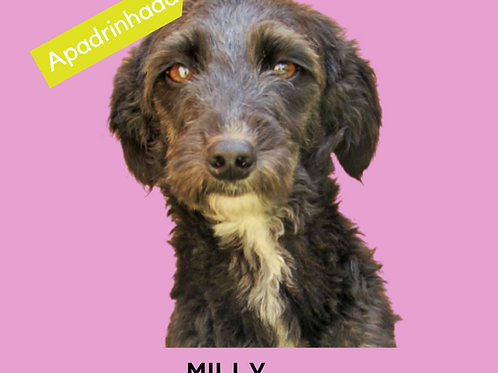 Milly-tutty