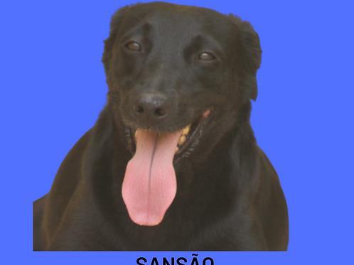 Sansão-brigitte