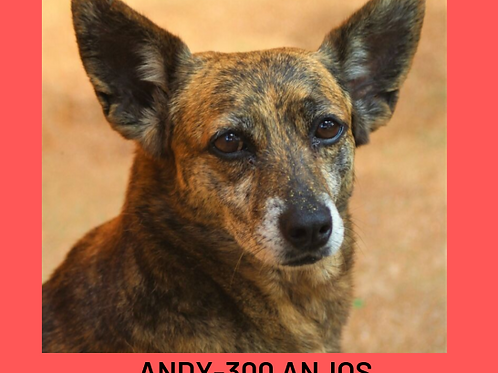 Andy-300 Anjos