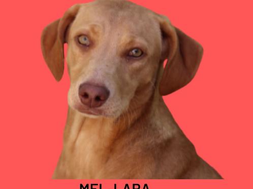 Mel-lara