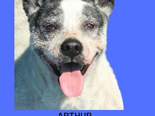 Arthur-300 Anjos