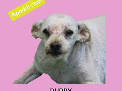 Puppy-Sr. Claudio