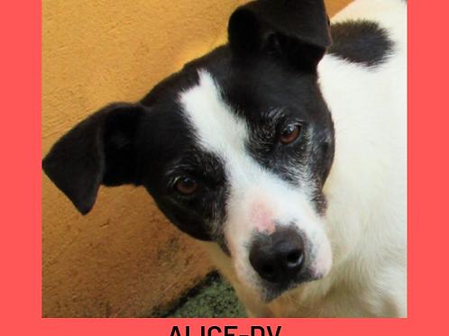 Alice-DV