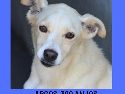 Argos-300 Anjos