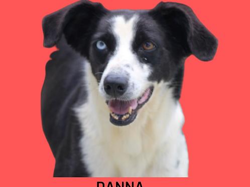 Danna-300 Anjos
