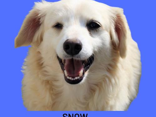 Snow-rita