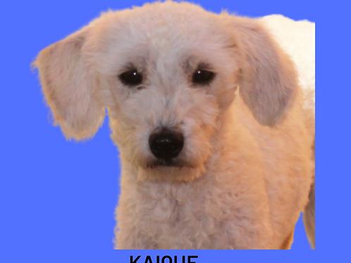 Kaique-ipojuca