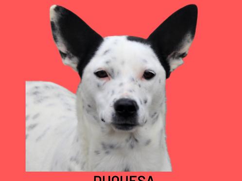 Duquesa-Sr. Claudio