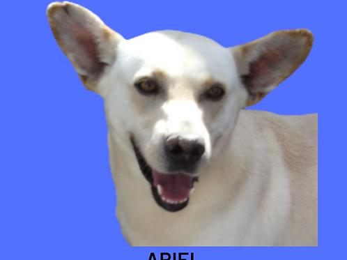Ariel-parelheiros