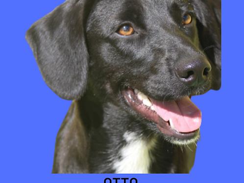 Otto-300 Anjos