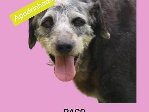 Paco-angélica