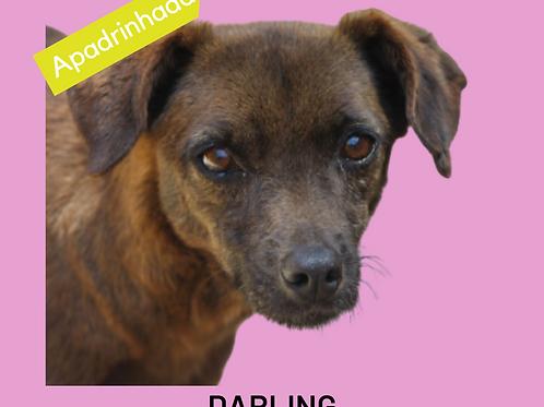 Darling-300 Anjos